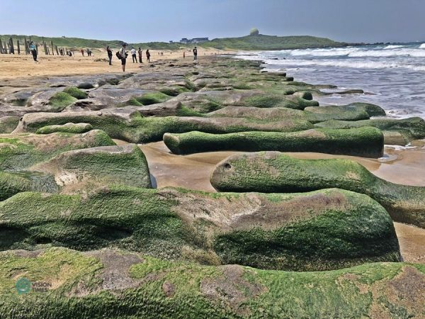 As the weather warms, the algae gradually disappear with exposure to the sun. (Image: Billy Shyu / Vision Times)