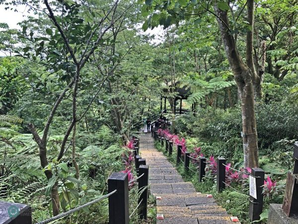 One of the hiking trails at the Tucheng Tung Blossom Park in New Taipei City. (Image: Billy Shyu / Vision Times)
