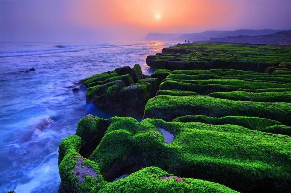 These reefs seem to be covered with a verdant carpet. (Image: North Coast & Guanyinshan National Scenic Area Administration, Tourism Bureau, Taiwan)