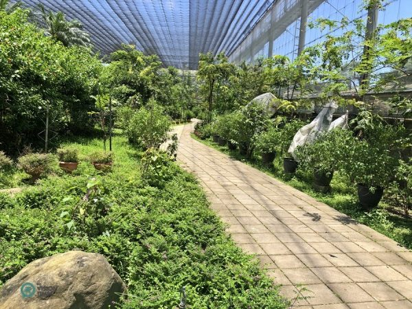 The Butterfly Ecological Garden in Asia Cement Ecological Park. (Image: Billy Shyu / Vision Times)