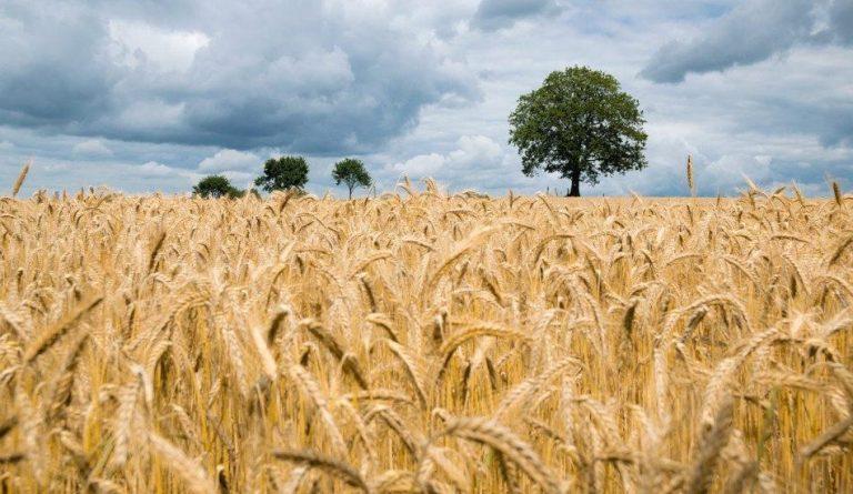 Many Australian farmers are staring at losses after China increased tariffs. (Image: Pixabay / CC0 1.0)