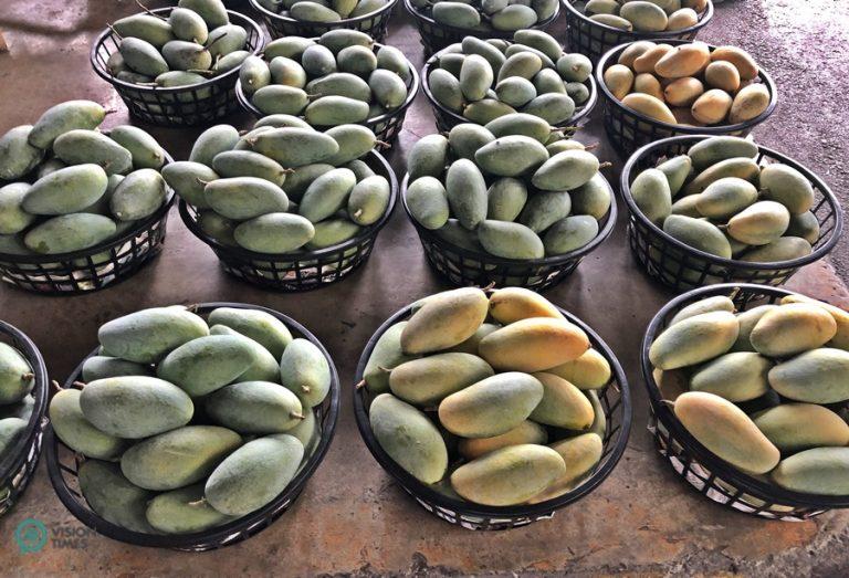 Yujing mango wholesale market is a great place to buy quality mangoes. (Image: Billy Shyu / Nspirement)