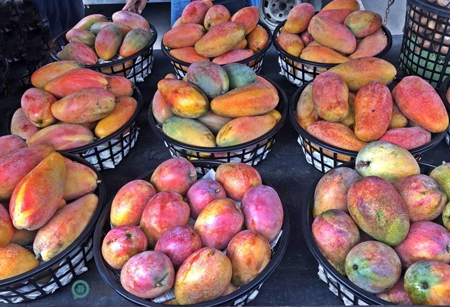 There are a big variety of mangoes sold at Yujing mango wholesale market. (Image: Billy Shyu / Vision Times)