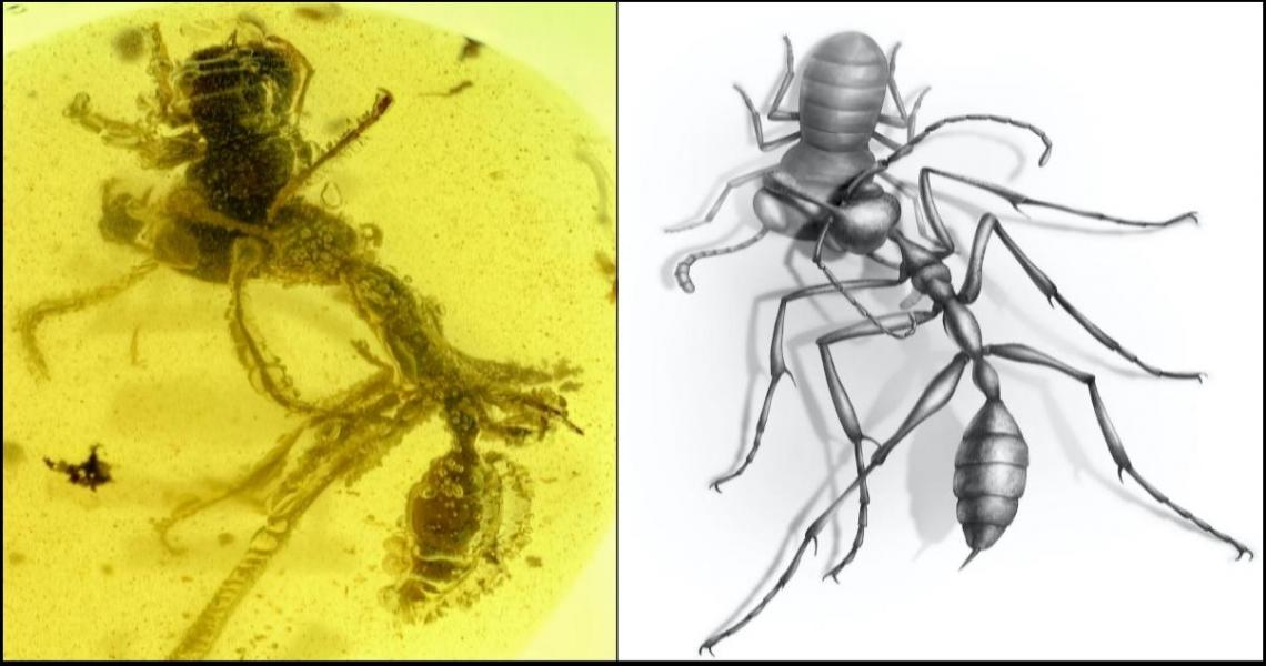 Researchers discover a worker of the hell ant Ceratomyrmex ellenbergeri grasping a nymph of Caputoraptor elegans (Alienoptera) preserved in amber dated to ~99 Ma. (Credit: NJIT, Chinese Academy of Sciences and University of Rennes, France)