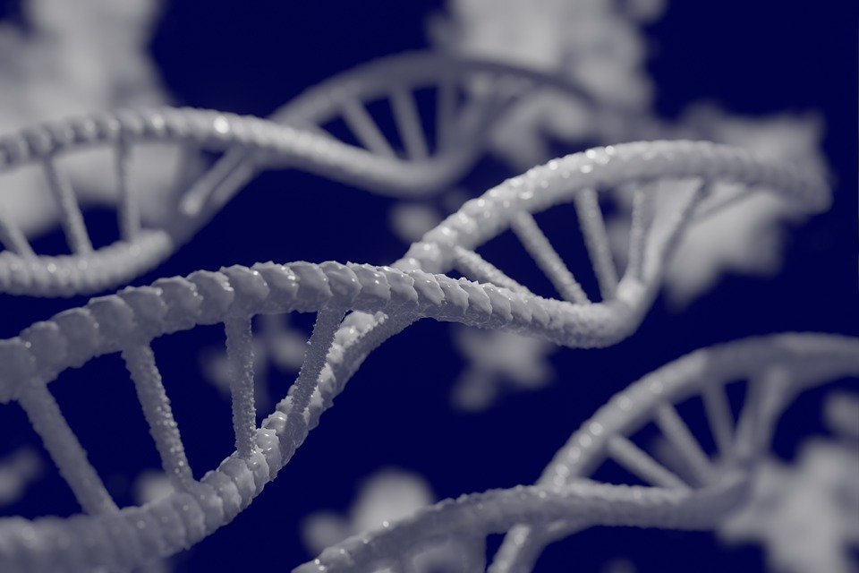 The new findings confirm previously reported cases of gene flow between ancient humans and their relatives, and also point to new instances of interbreeding. (Image: via pixabay / CC0 1.0)