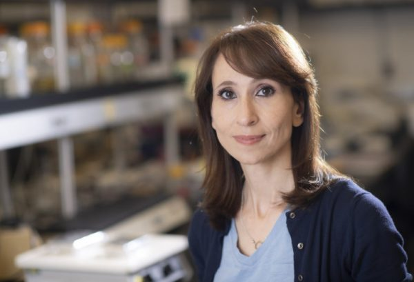 "'My principle is to not wait until you see the symptoms,"" says Amal Alachkar, a UCI associate professor of teaching in pharmaceutical sciences who led the schizophrenia research study. ""The roots of the symptoms are very, very early, so why don't we do something to prevent rather than to intervene?' (Image: Steve Zylius / UCI) photo: Steve Zylius/UCI"