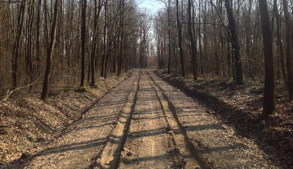 Dirt road in early spring.