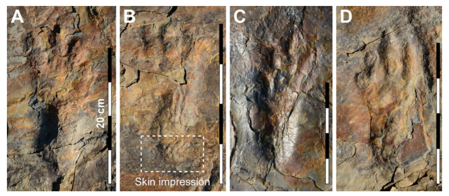 fossilized dinosaur footprints