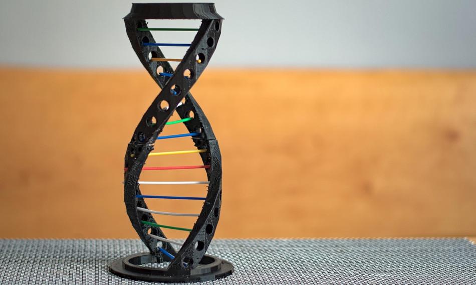A model of human DNA.