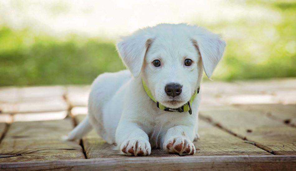 A puppy sitting on a porch.