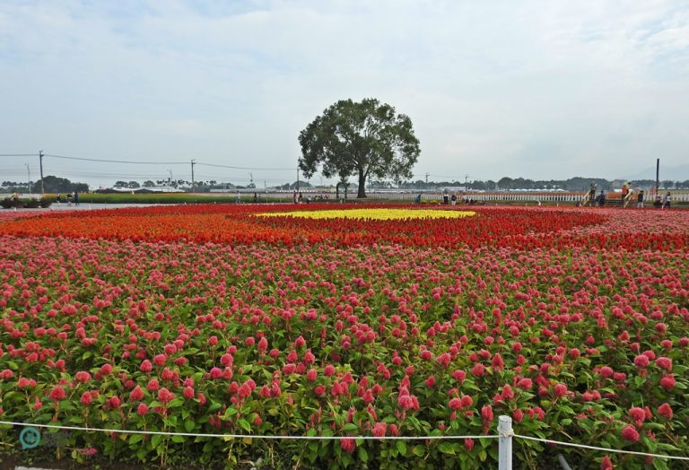 The 2020 Xinshe Sea of Flowers and Taichung International Flower Carpet Festival are expected to attract over 2 million visitors.