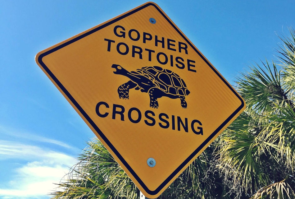 "Sign reads: ""Gopher Tortoise Crossing."""