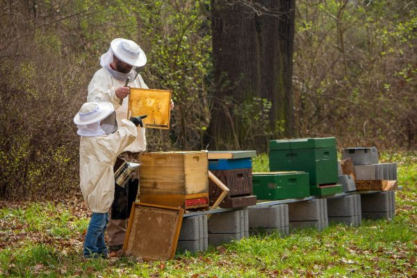European custom of Telling the Bees