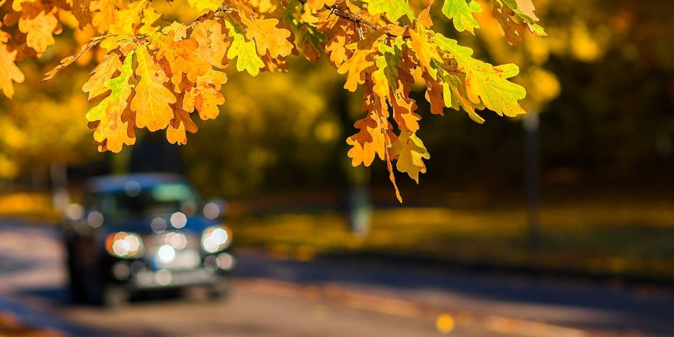 Autumn leaves in focus with a truck driving down the road in the background.