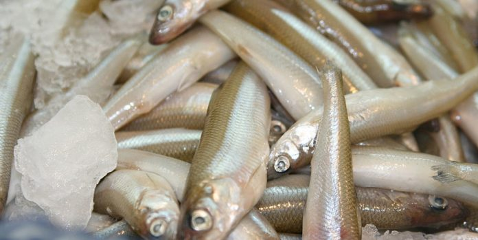 Smelt for sale at a fish market.