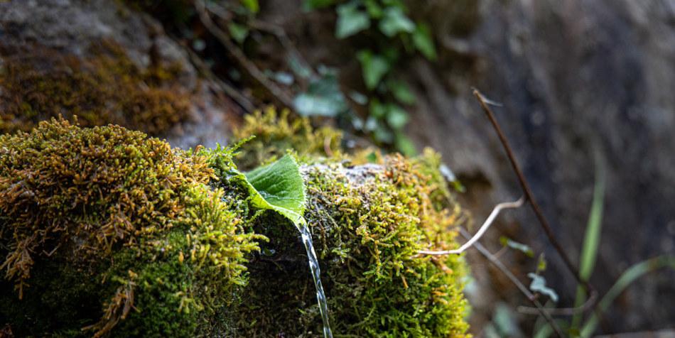 Moss on a rock.