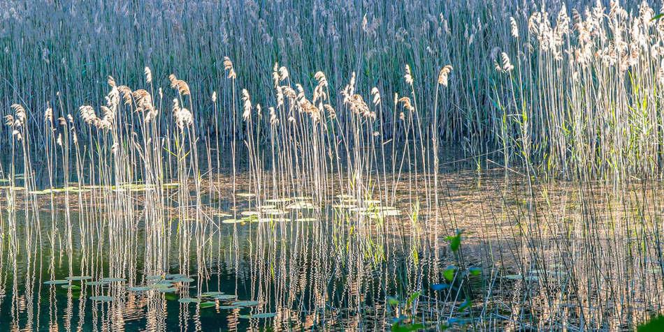 A photo of a pond.