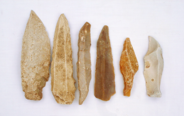 Ancient DNA helps trace the movements of people and animals in the Caribbean.