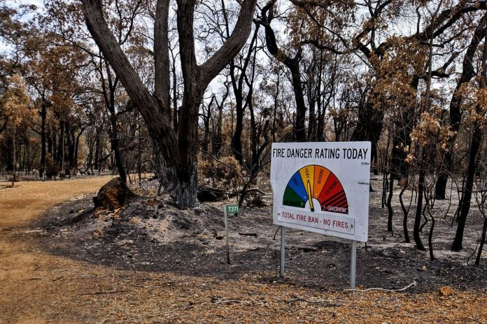 Their recommendations include implementing mapping and monitoring of plants and animals in bioregions most at risk in future fires, and developing strategies to protect these areas during fires.