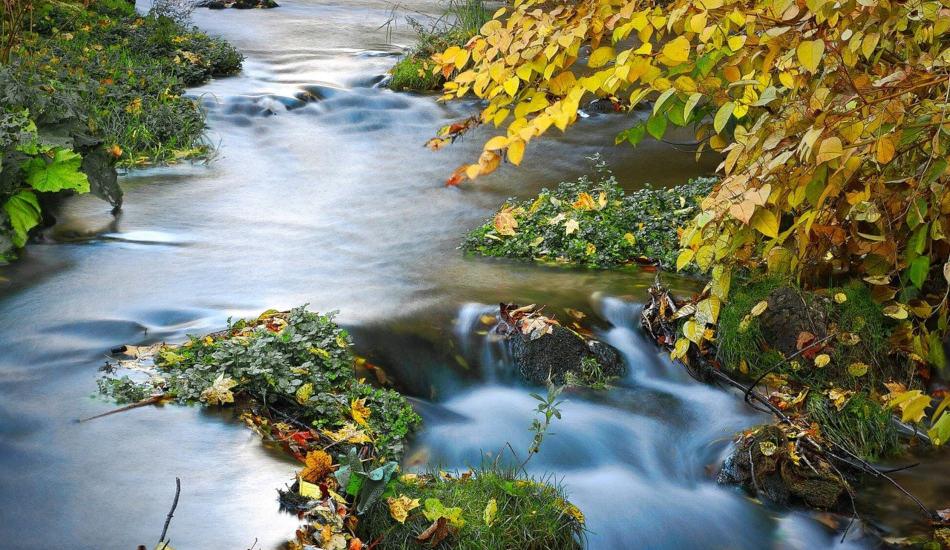 A flowing stream.