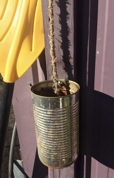 An old tin with a rope hanging to the bottom of tin that holds water. Designed to be a bee friendly drinking fountain and only attracting bees on hot days in dry climates. Image by Darren Anderson.