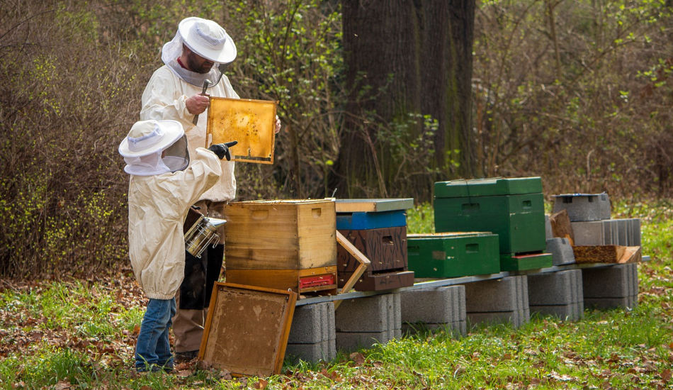 An adult beekeeper and a child work with a beehive.
