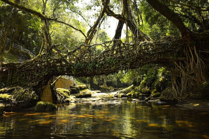 Amazing India's Living Root Bridges