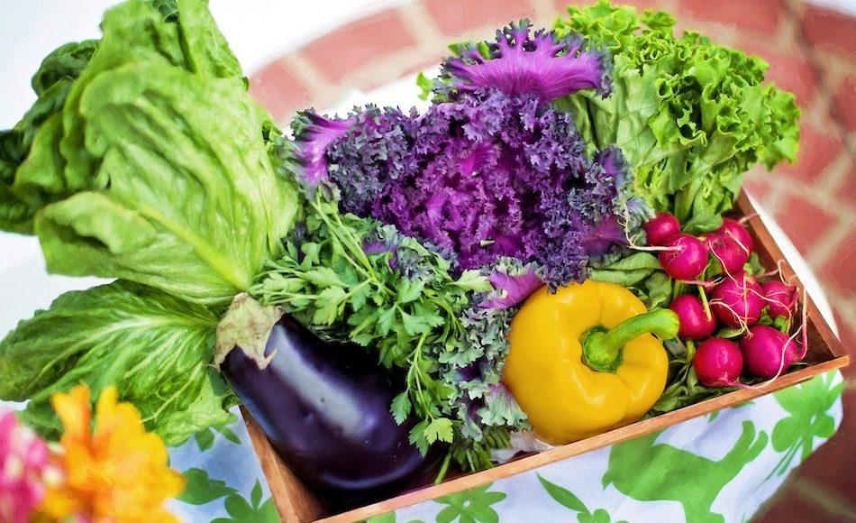 Garden harvest of fresh vegetables in a basket.