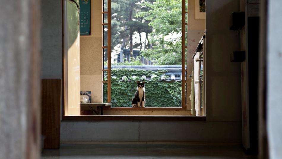 Cat resting inside the 1920s Joseon Dynasty Tea House