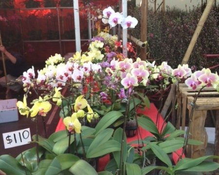 chinese new year flower market in hong kong orchids