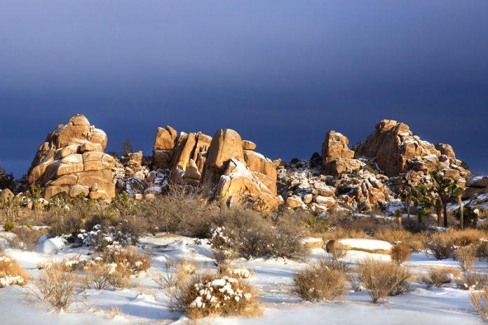 Rare snowfall in Joshua Tree National Park