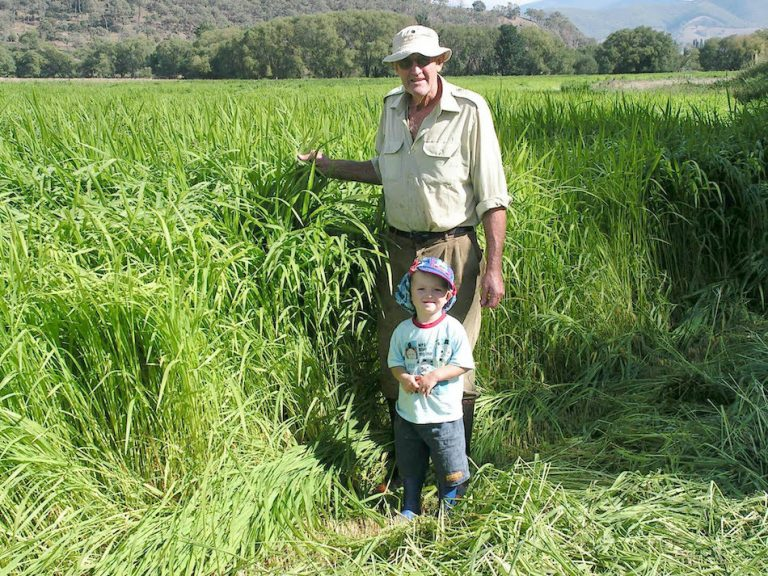ohnny Whitsed and grandson, Zac Whitsed marvel at the grass growth for the upcoming harvest acheived from organic, regenerative farming.