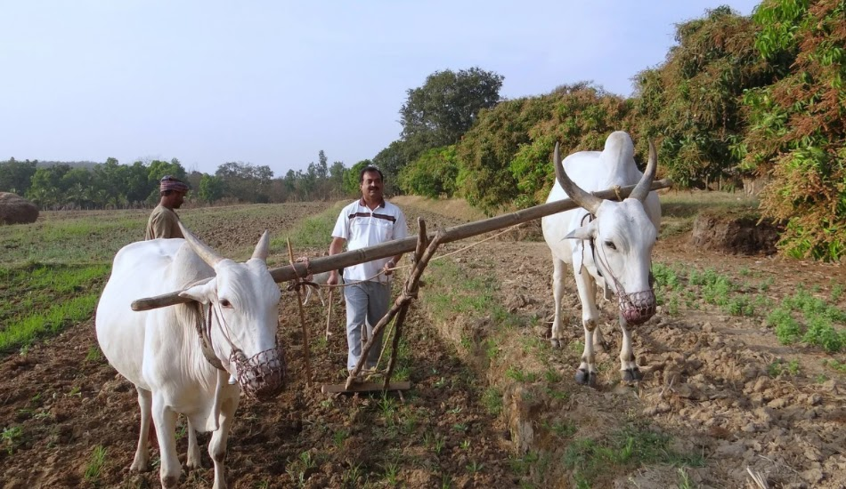 This image has an empty alt attribute; its file name is india_farming_.jpg