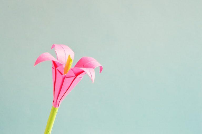 pink origami flower light blue background
