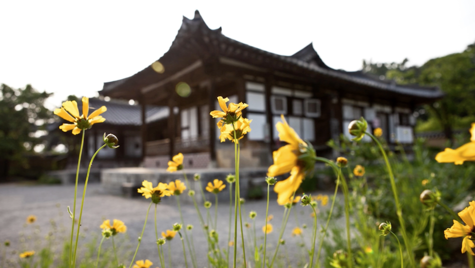 Seon Byeong-guk House with Yongshee's yellow flowers in the foreground.