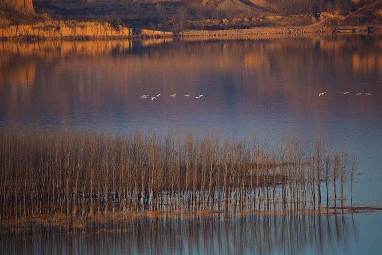 twilight Yellow River, China swans fly over