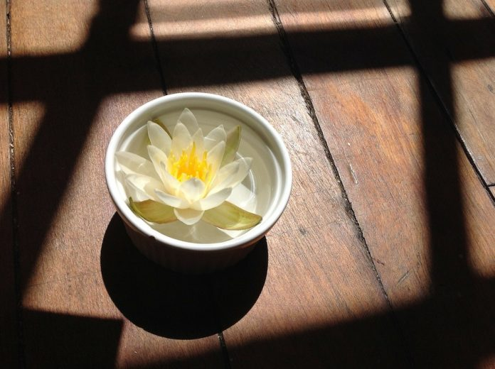 water lilly in a bowl of water on the floor by a window as sun shines over it