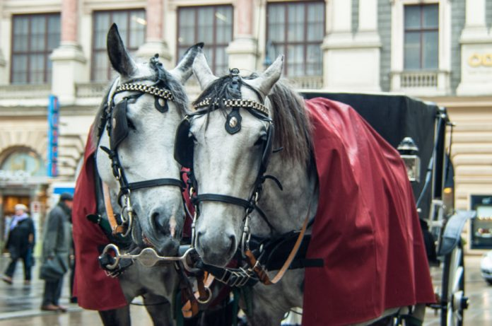 Closeup view of two horses and traditional Fiaker carriage at the Hofburg in Vienna, Austria.