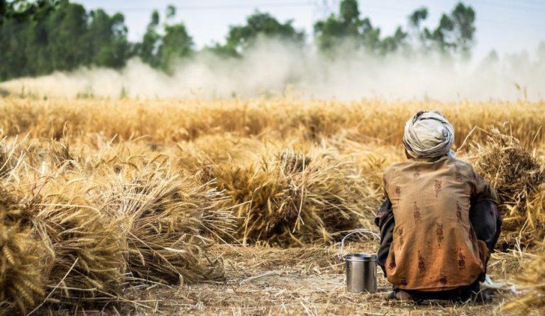 A man wearing a turban sits in a wheat field.