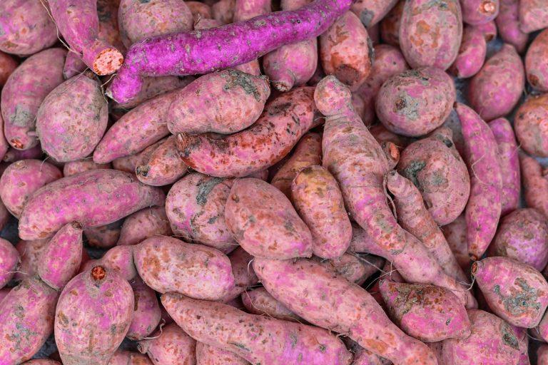 raw purple yams