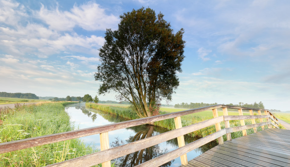 Tree by a bridge by a river.