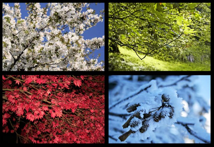A collage of trees seen in all four seasons.