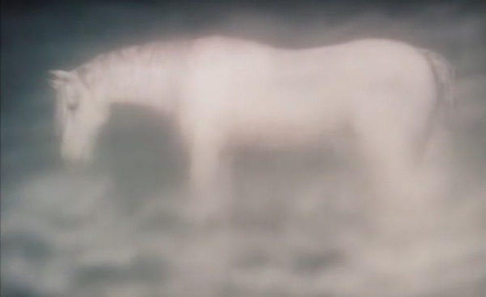 White horse animated screenshot in fog
