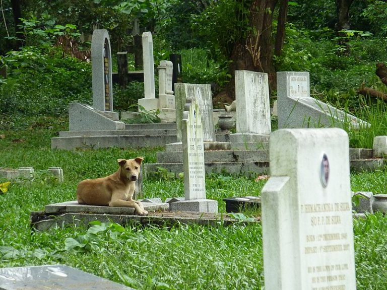 Loyalty shown by a dog in Italy, that visited its owners grave every day, is unexplainable.