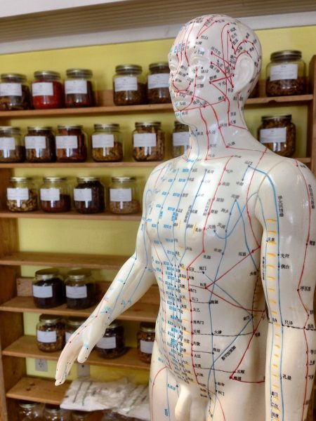 manequin in chinese medicine shop with meridians drawn all over body