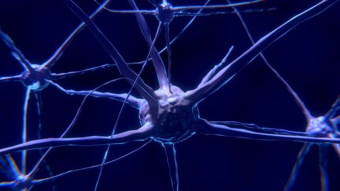 Real nerve cells in action - Our brain is naturally drawn to experiencing positive feelings and eluding unpleasant emotions.