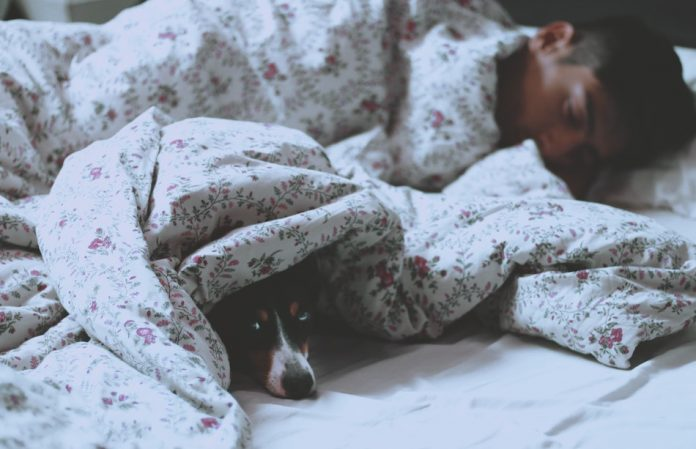 man under sheets sleeping dog also under sheets