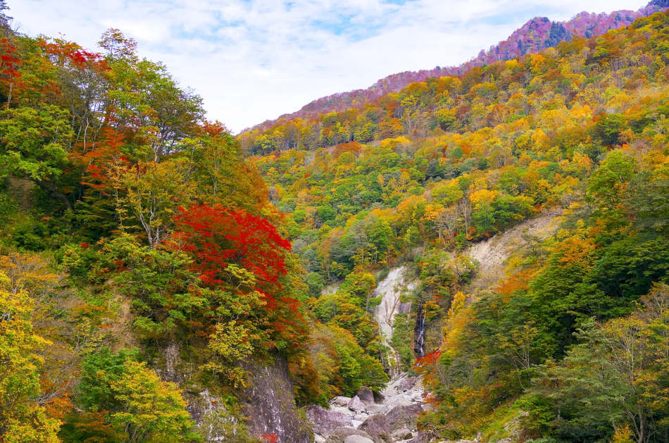 Trees with leaves changing colors in fall as seen on a mountainside.