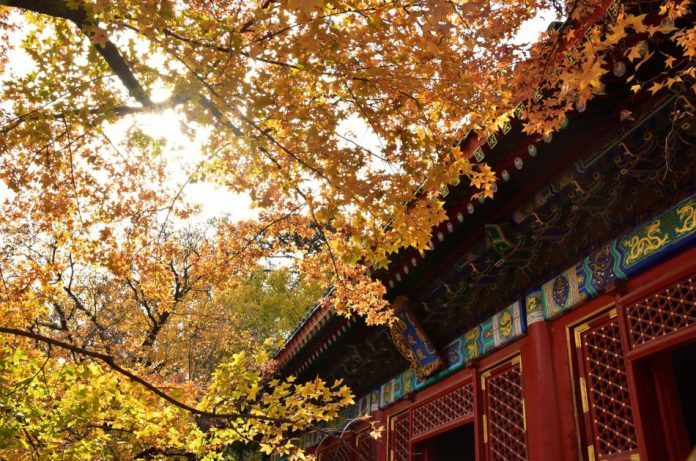 Roof line of an ancient Chinese building as seen through the trees with changing leaves in fall.