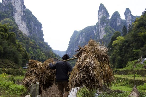 chinese farmer carrying straw on his back inbetween mountains